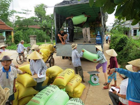 Doanh nghiệp thu mua giống lúa ở xã Duy Hòa vào chiều 15.7. Ảnh: T.S