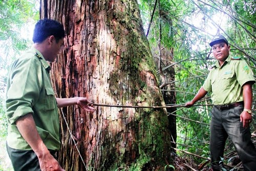 Quang Nam has founded security guard teams  to protect this po mu forest from wood poachers