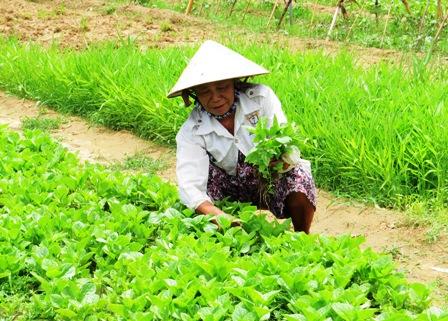 Người dân thôn Thanh Tam Đông, xã Cẩm Thanh trồng thí điểm rau hữu cơ. Hoàng Liên