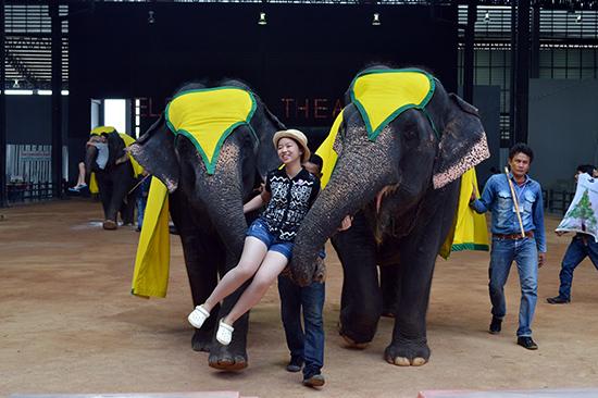 Du khách chụp ảnh lưu niệm cùng voi trong làng văn hóa Noong Nooch.