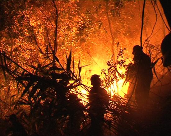 Cán bộ, chiến sĩ LLVT Đà Nẵng dập lửa cứu rừng trên đèo Hải Vân. Ảnh: Đ.T.N.D