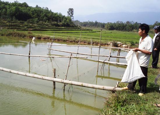 Đào ao nuôi cá nước ngọt trên đất lúa kém hiệu quả. Ảnh: TRIÊU NHAN