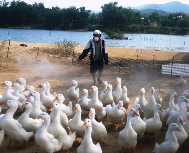 Phun tiêu độc thường xuyên để ngăn chặn nguy cơ dịch bệnh bùng phát trên vật nuôi.