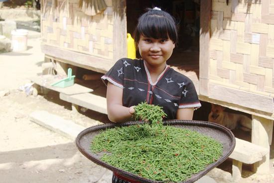 Ớt a riêu được kỳ vọng là cây xóa nghèo cho người dân xã Ma Cooih, huyện Đông Giang.
