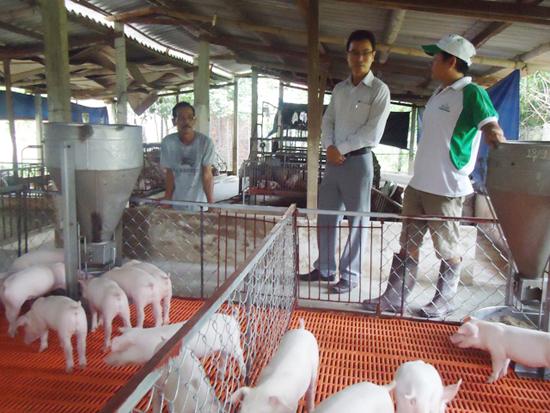 Trang trại nuôi heo của anh Nguyễn Ngọc Anh được đầu tư từ tiền đi xuất khẩu lao động. Ảnh: V.TRƯỜNG