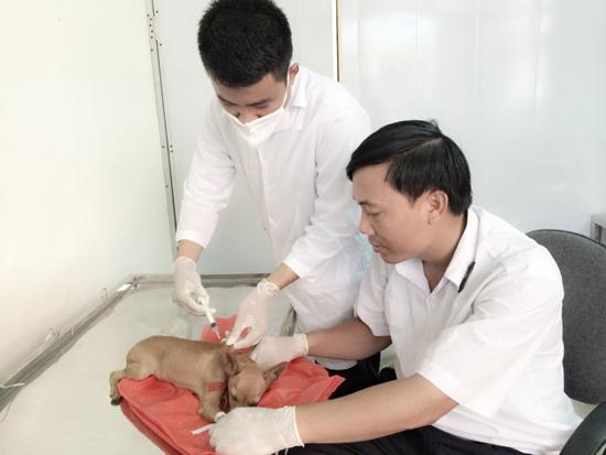Tiêm vắc xin phòng dại cho vật nuôi.