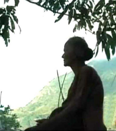 Bóng cây kỷ niệm sưởi ấm mẹ già. Ảnh: Internet