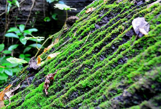 Quần thể thực vật trên đá phát triển mạnh những nơi có ánh sáng xuyên qua.