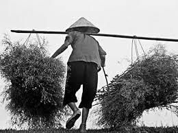 Mẹ cất công tìm những cây thuốc nam mang vào thành phố chăm con sinh nở. Ảnh: Interner