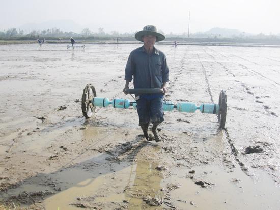 Nhà nông phải tuân thủ nghiêm lịch thời vụ và cơ cấu giống do ngành chuyên môn đưa ra.Ảnh: MAI LINH