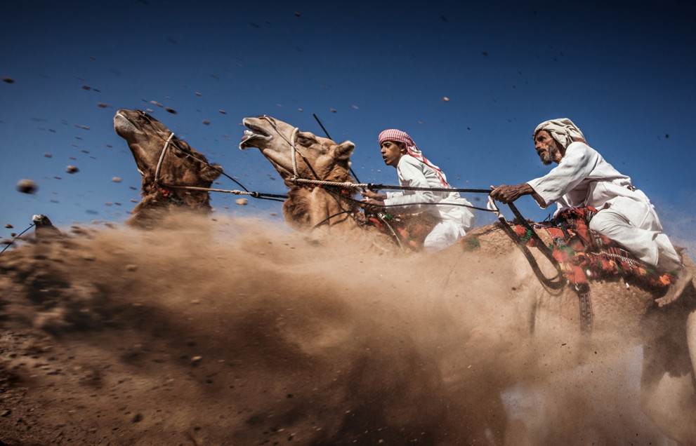 Camel Ardah, as it called in Oman, is one of the traditional styles of camel racing between two camels controlled by expert riders. The faster camel is the loser, so they must be running at the same speed level in the same track. #  © Ahmed Al Toqi