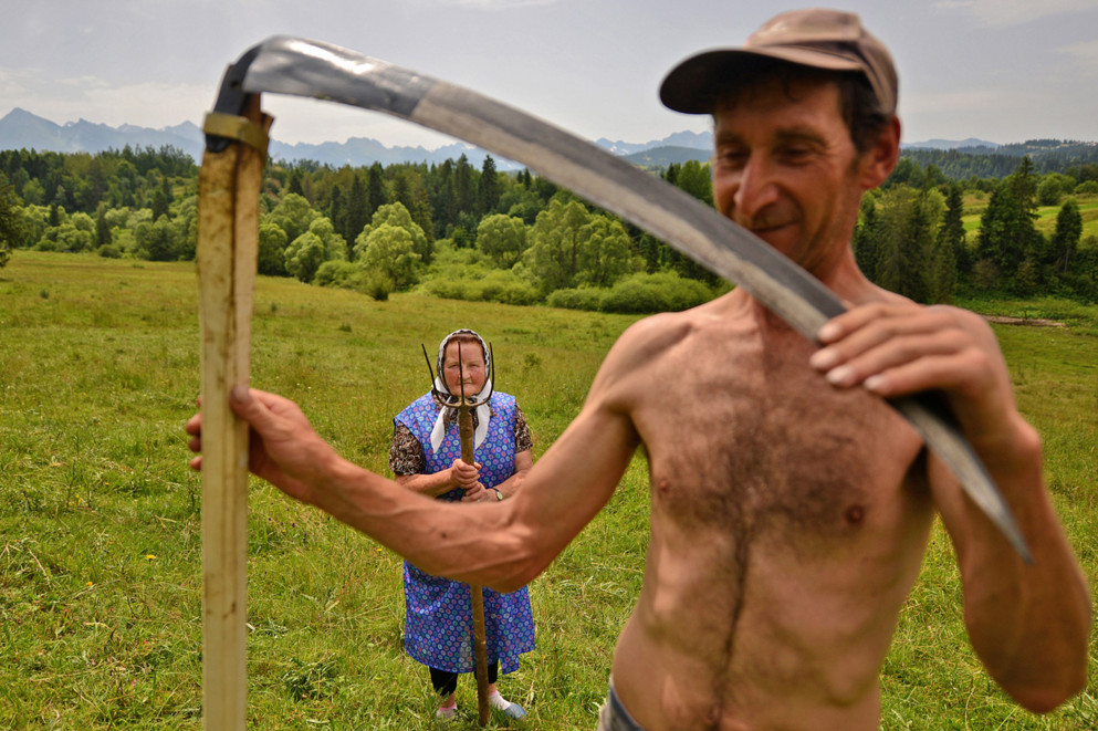Traditional haymaking in Poland. Many people continue to use the scythe and pitchfork to cut and sort the hay. #  © Bart Omiej Jurecki