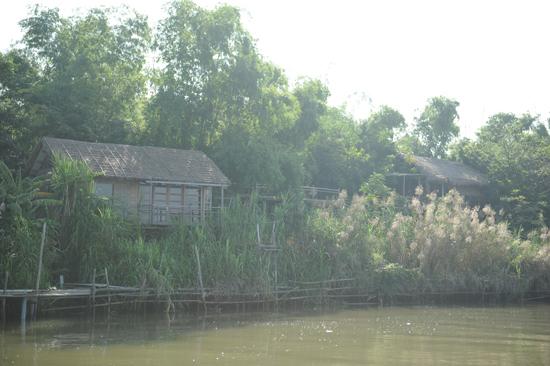 Những ngôi nhà tranh ẩn, hiện trong lũy tre làng: Ảnh: Minh Hải