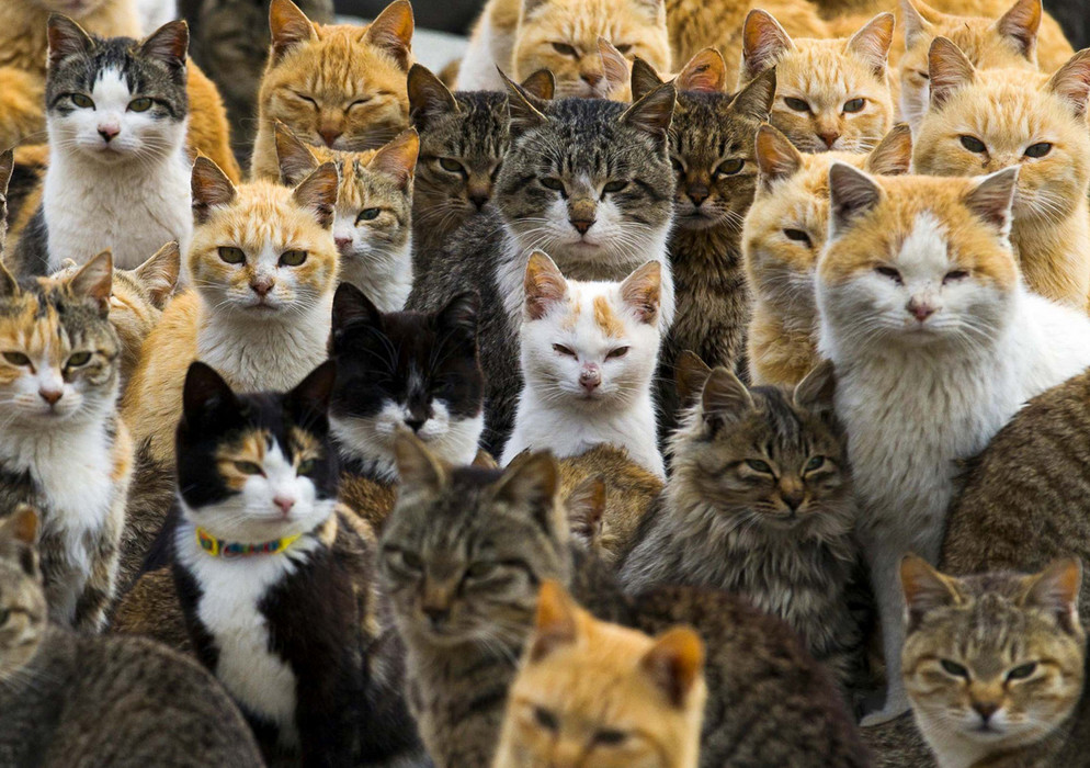 Cats crowd the harbor on Aoshima Island in the Ehime Prefecture in southern Japan on February 25, 2015. An army of cats rules the remote island in southern Japan, curling up in abandoned houses or strutting about in a fishing village that is overrun with felines outnumbering humans six to one. # Thomas Peter / Reuters