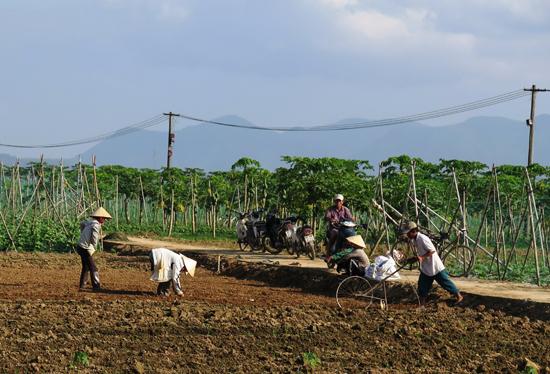 Vùng sản xuất rau Bàu Tròn, xã Đại An. Đại Lộc. Ảnh: T.HIÊN