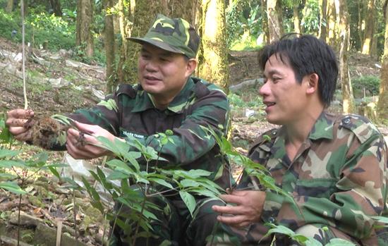 Giới thiệu vườn sâm với Phó Chủ tịch UBND tỉnh Lê Văn Thanh. Ảnh: T.HUYNH