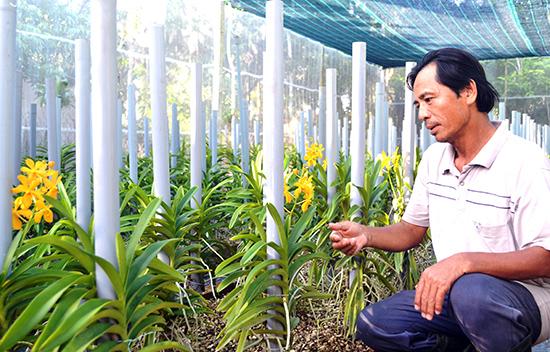 Ông Lê Thanh Cương và vườn lan mokara của gia đình. Ảnh: Q.VIỆT