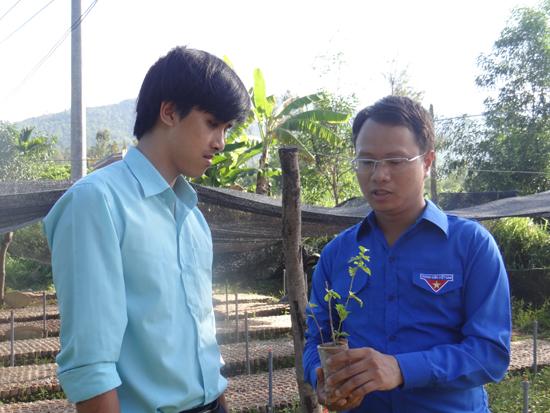 Anh Nguyễn Duy Thạnh – Bí thư Đoàn Công ty TNHH MTV Cao su Quảng Nam giới thiệu về loại cây cà gai leo. Ảnh: H.C