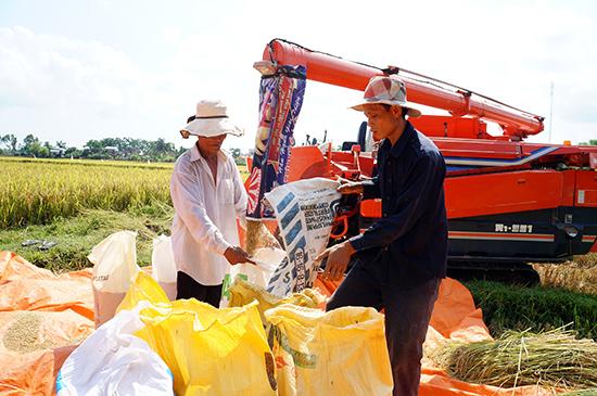 """Với sự chuyển đổi kịp thời, nhiều HTX đã vươn mình, từng bước trở thành """"bà đỡ"""" của nông dân. Trong ảnh: Các dịch vụ nông nghiệp của các HTX giúp nông dân giảm bớt được sức lao động."""