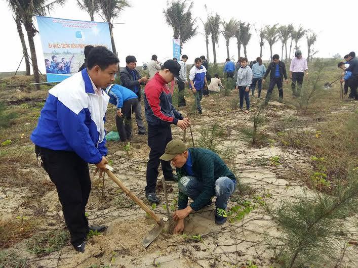 Tuổi trẻ Hội An trồng 200 cây dương liễu. Ảnh: L.T.N
