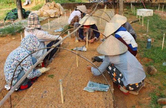 Sau khi đưa khỏi phòng thí nghiệm, keo con được ươm vào bầu đất tại vườn ươm Trung tâm Giống nông lâm nghiệp Quảng Nam. Ảnh: VĂN HÀO