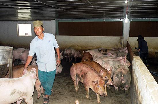 Xây dựng mô hình chăn nuôi heo sạch và cung ứng sản phẩm an toàn là vấn đề cần được tính đến.