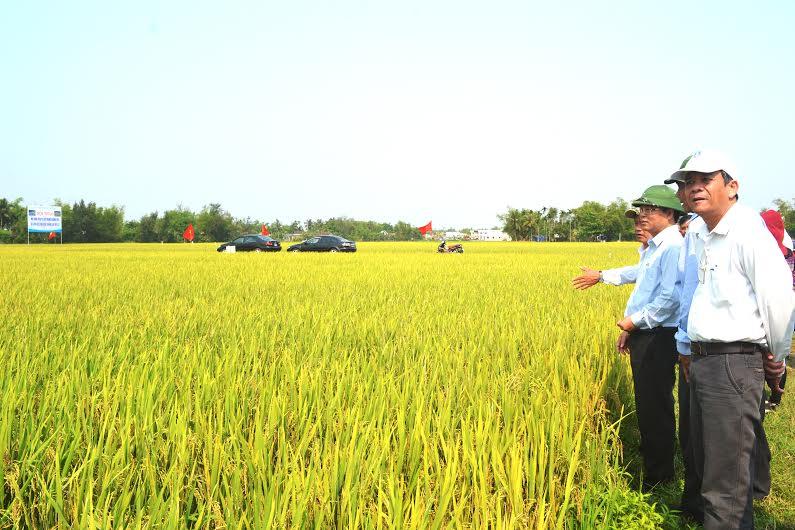 Phó Chủ tịch UBND tỉnh Lê Trí Thanh thăm đồng ruộng tại xã Bình Đào được sản xuất trên cơ sở tích tụ, tập trung ruộng đất. Ảnh: Q.V