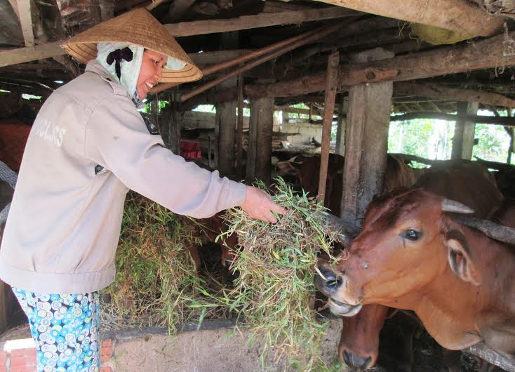 Không đủ khả năng miễn dịch, vật nuôi dễ bị nhiễm các loại bệnh nguy hiểm. Ảnh: N.P