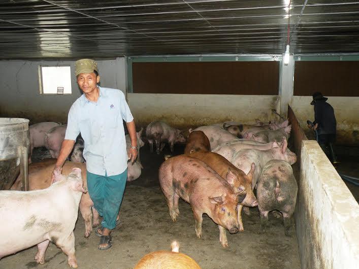 Tại diễn đàn, các chuyên gia đã phổ biến nhiều gói kỹ thuật về phát triển chăn nuôi an toàn sinh học.