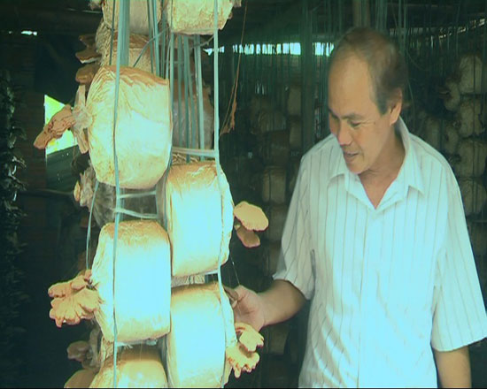 Nông dân Huỳnh Công Phượng bên mô hình trồng nấm linh chi. Ảnh: T.B