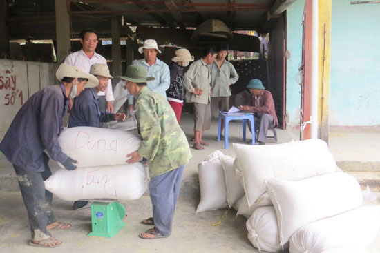 Nông dân phấn khởi vì lúa lai đạt năng suất cao. Ảnh: HOÀNG LIÊN