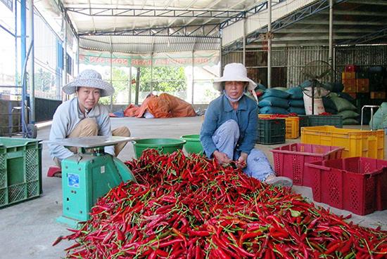 Cần hỗ trợ các hợp tác xã và tổ hợp tác trong việc liên kết sản xuất, chế biến nông sản.Ảnh: N.S