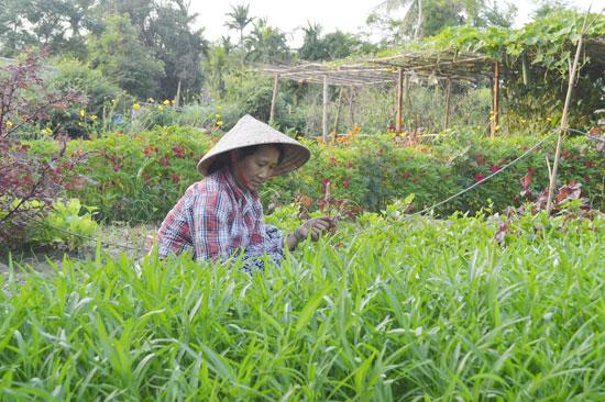Những vườn rau hữu cơ của làng trở thành sản phẩm đặc trưng hấp dẫn du khách. Ảnh: G.K