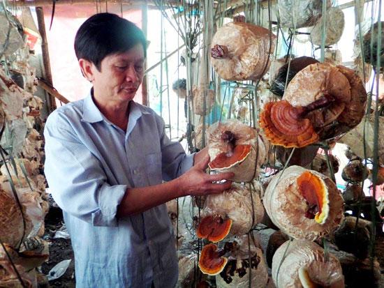 Mô hình trồng nấm linh chi kiểng của ông Phan Châu Mỹ.