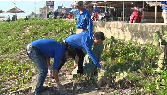 ĐVTN tham gia dọn vệ sinh trên bãi biển Hạ Thanh. Ảnh: MỸ LINH