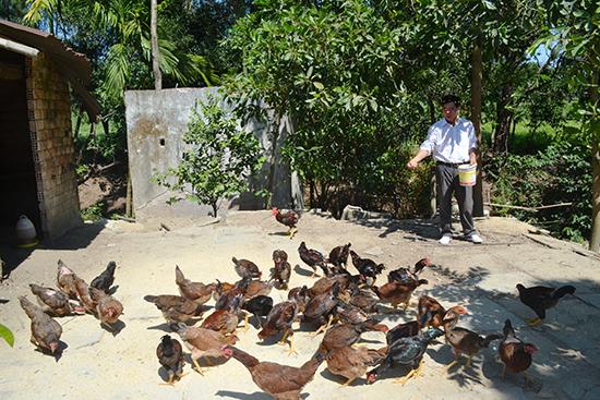 Mô hình nuôi gà của gia đình ông Quy.