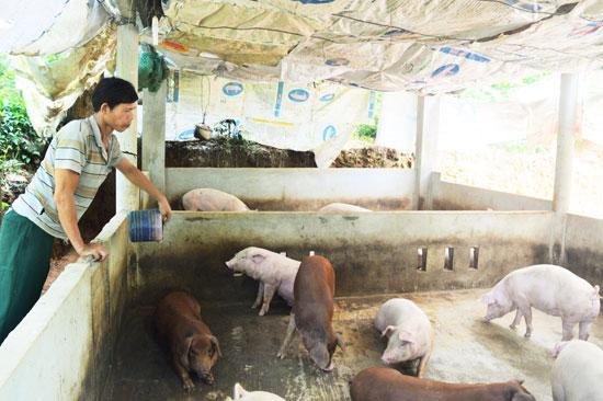 Nhờ chương trình hỗ trợ vay không lãi suất, nhiều gia đình khó khăn ở Tiên Phước đã có sinh kế ổn định. Ảnh: Q.T