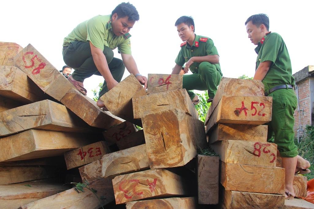 Vụ phá rừng pơ mu khu vực biên giới Nam Giang được cho là đặc biệt  nghiêm trọng. Ảnh: C.N