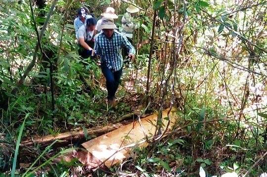 Đoàn công tác của tỉnh tiếp cận hiện trường vụ phá rừng pơ mu. Ảnh: T.C