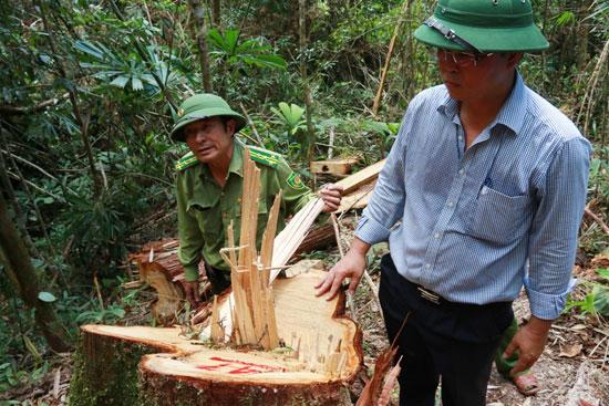 Phó Chủ tịch UBND tỉnh Lê Trí Thanh tại hiện trường vụ phá rừng. Ảnh: NGƯỚC - CÔNG