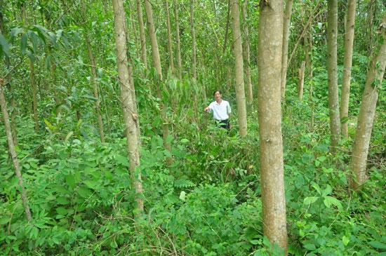 Diện tích đất rừng xảy ra tranh chấp giữa hai hộ Cao Thị Thọ và Huỳnh Thị Cơ.   Ảnh: HÀN GIANG