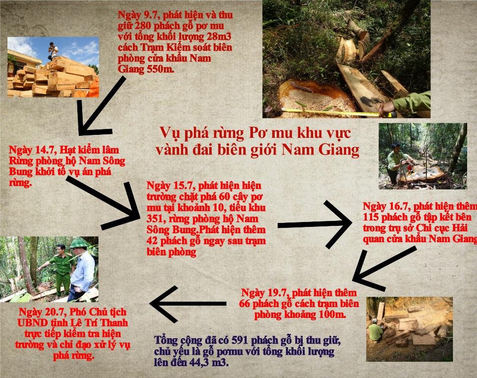 Tóm tắt diễn biến vụ phá  rừng Pơ mu (Infographic: THÀNH CÔNG)