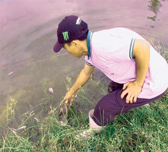 Cá chết trong ao nuôi của người dân xã Tam Hiệp (Núi Thành) gần nhà máy sản xuất sô đa Chu Lai.