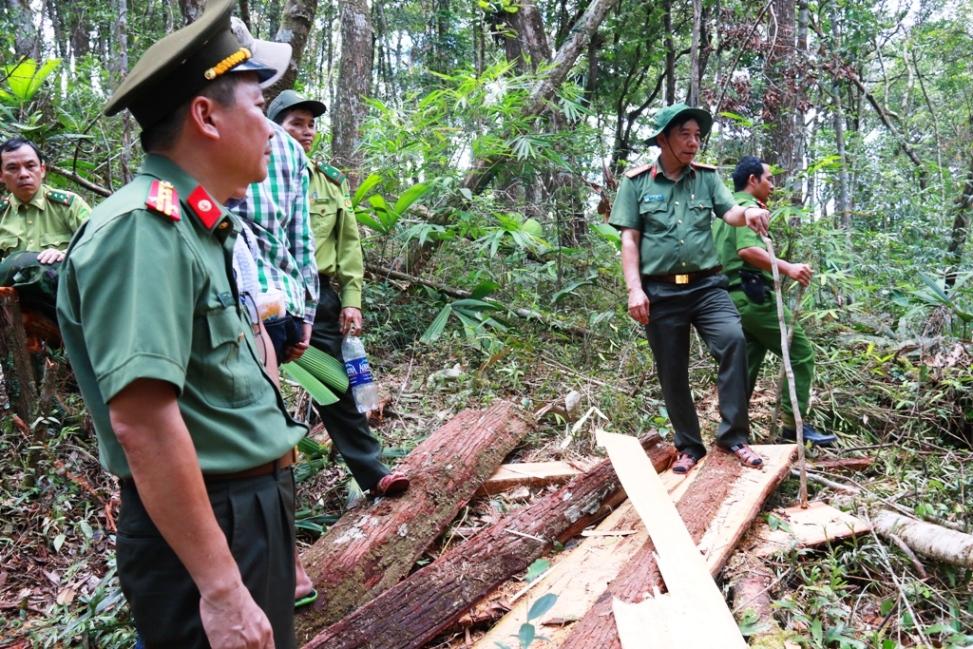 Lực lượng chức năng kiểm tra hiện vụ phá rừng pơ mu khu vực biên giới Nam Giang. Ảnh: N.C