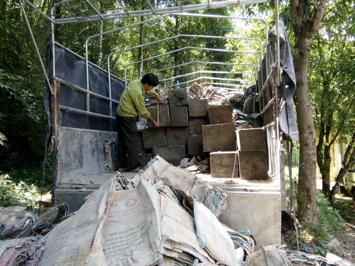 Số lượng lớn gỗ được chở trên xe tải. Ảnh: X.M