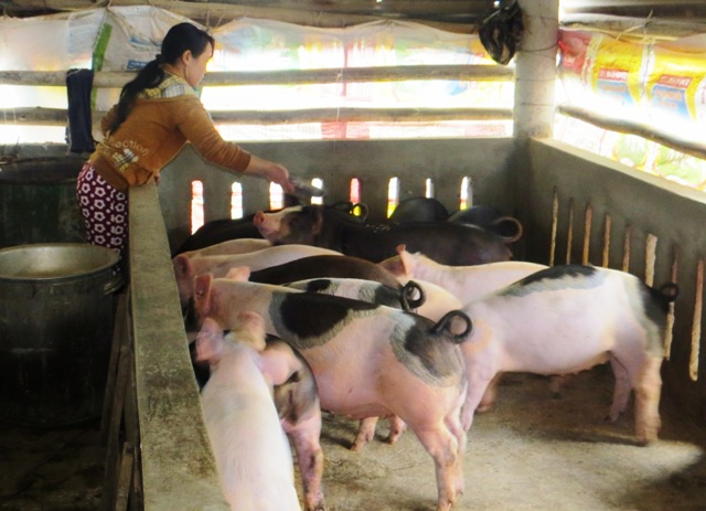 Phòng trừ dịch bệnh trong chăn nuôi hiệu quả. Ảnh: Hoàng Liên