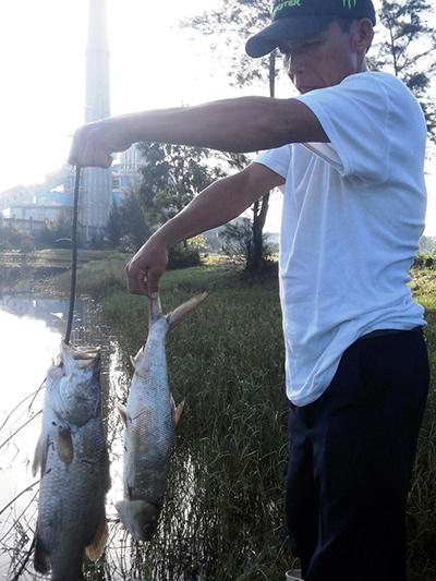 Cá nuôi của người dân chết gần với khu vực sản xuất của nhà máy.