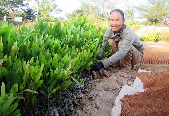 Nhiều cơ sở ươm giống cây lâm nghiệp ở vùng biển Duy Hải mang lại hiệu quả kinh tế cao.Ảnh: TƯ RUỘNG