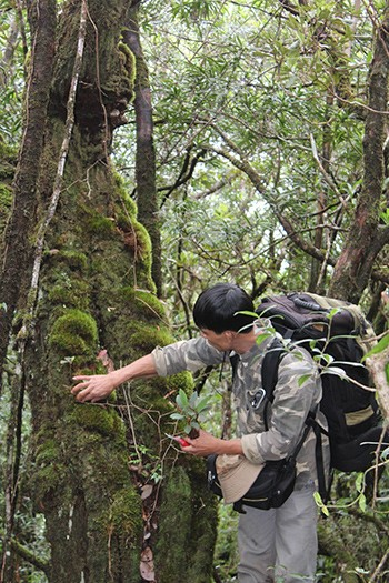 Engineer Tran Ngoc Toan observing the specific features of a tree in Arung mountain