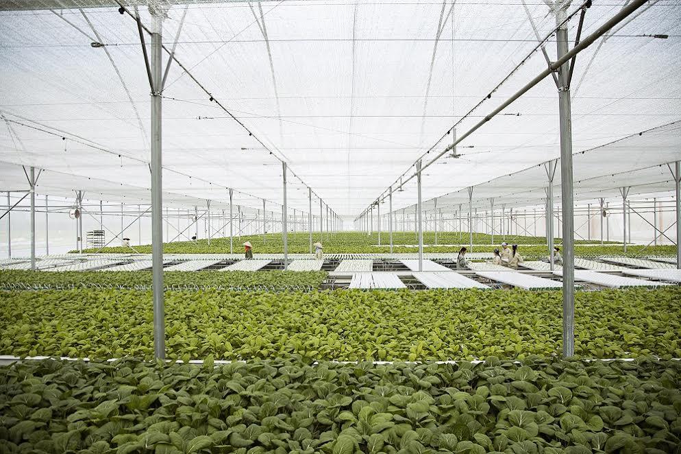 các hộ sản xuất có quy mô tối thiểu trên 1ha cam kết sản xuất nông sản sạch